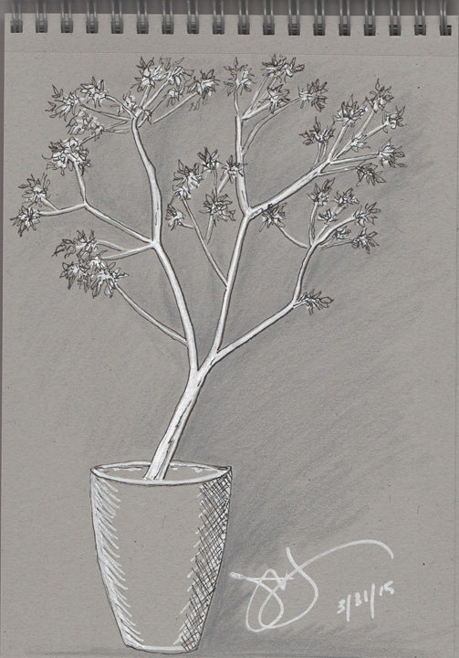 1-Jane's tree