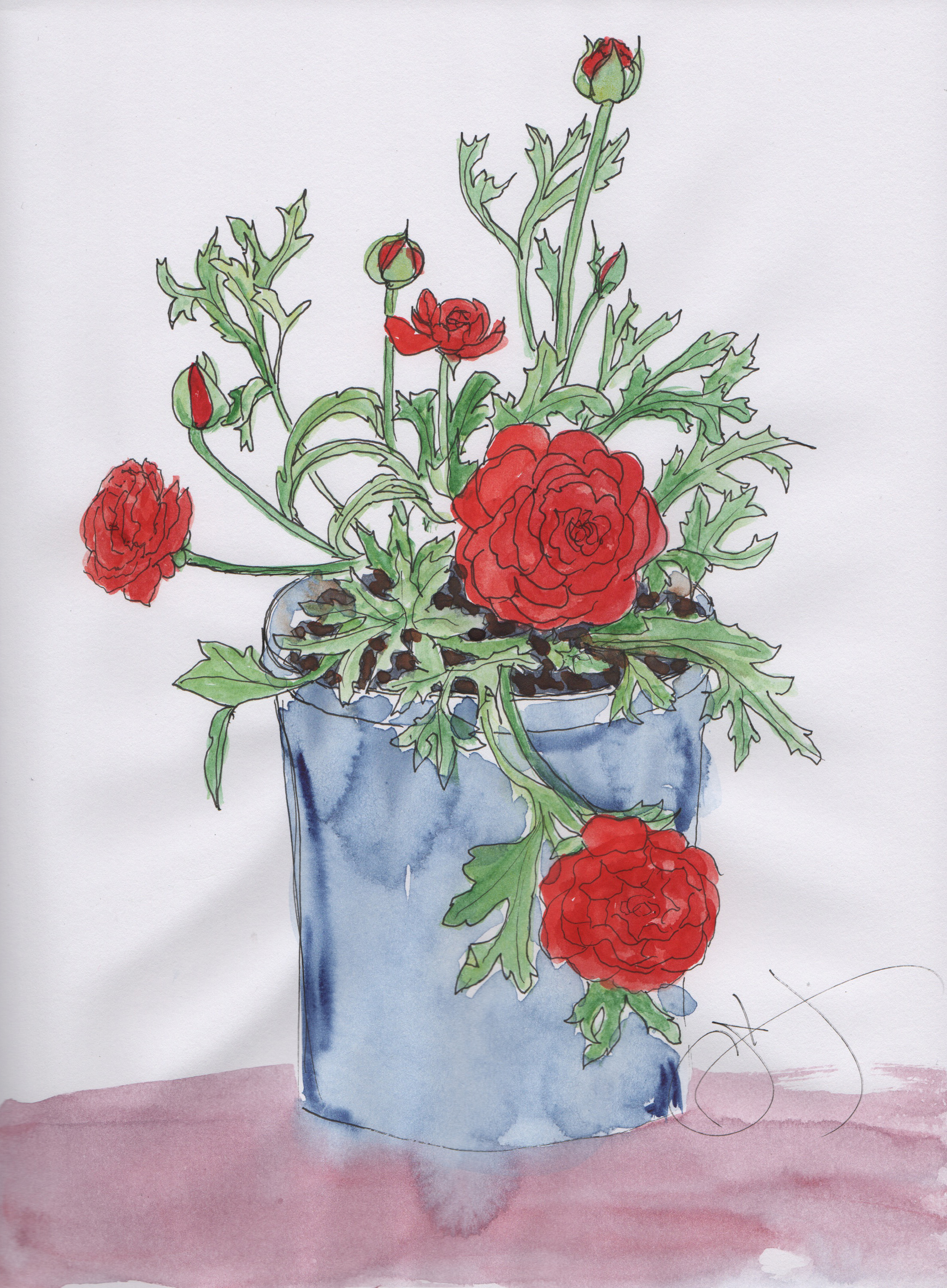 red ranunculas-blue pot