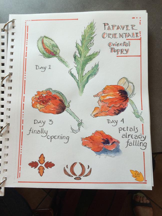 5-poppy design