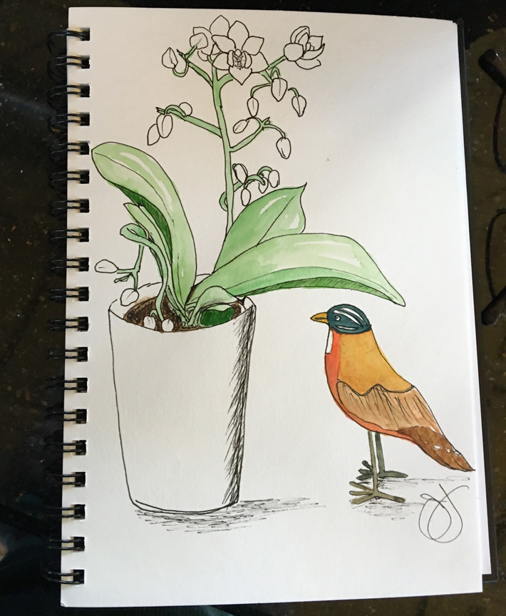 bird-Jane-1