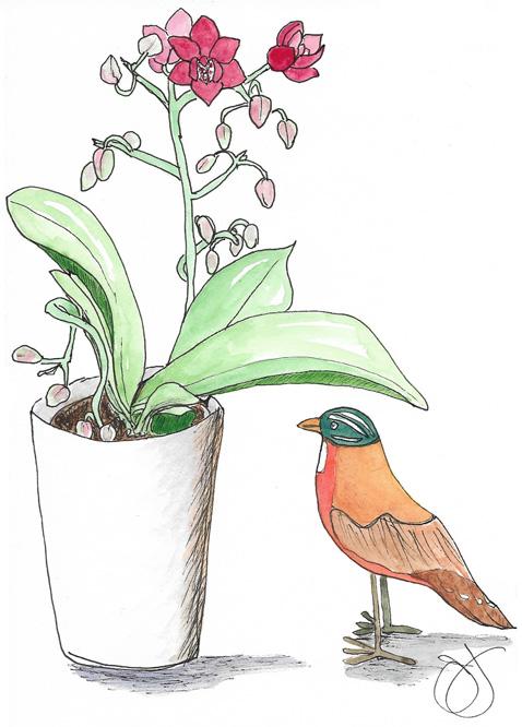 bird-Jane-2