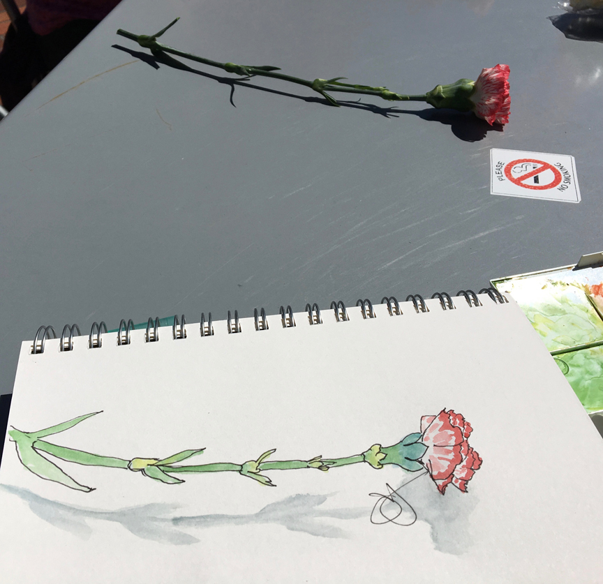 Jane-carnation