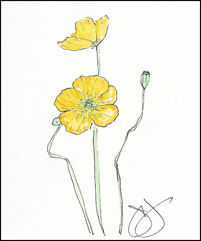 Jane-Yellow Iceland Poppies
