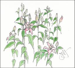 Jane-lilies-2