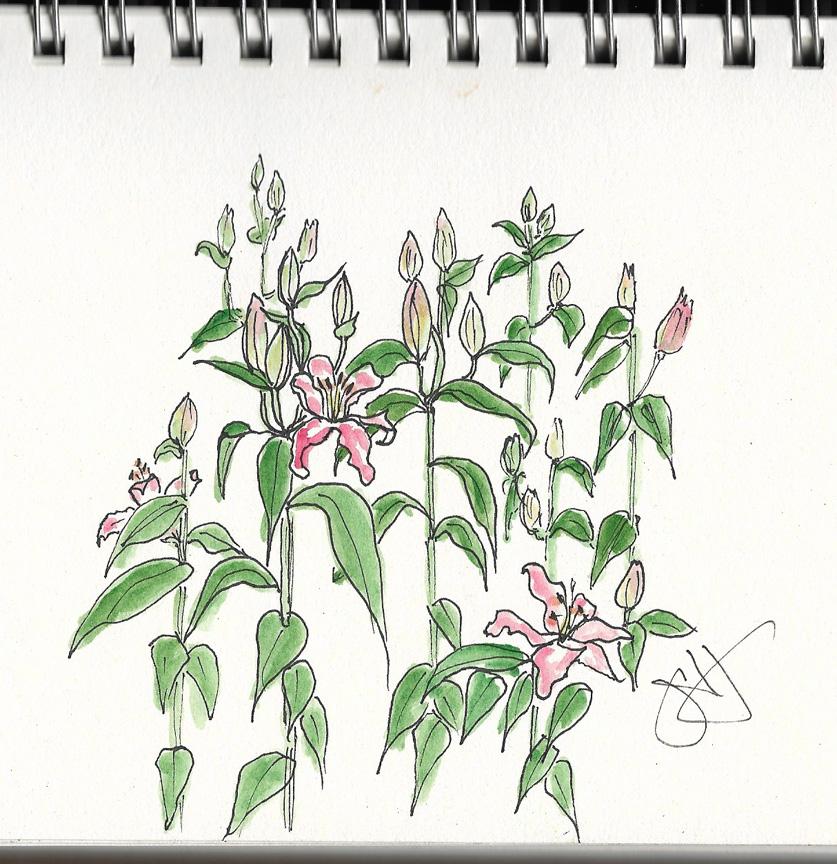 Jane-lilies-3